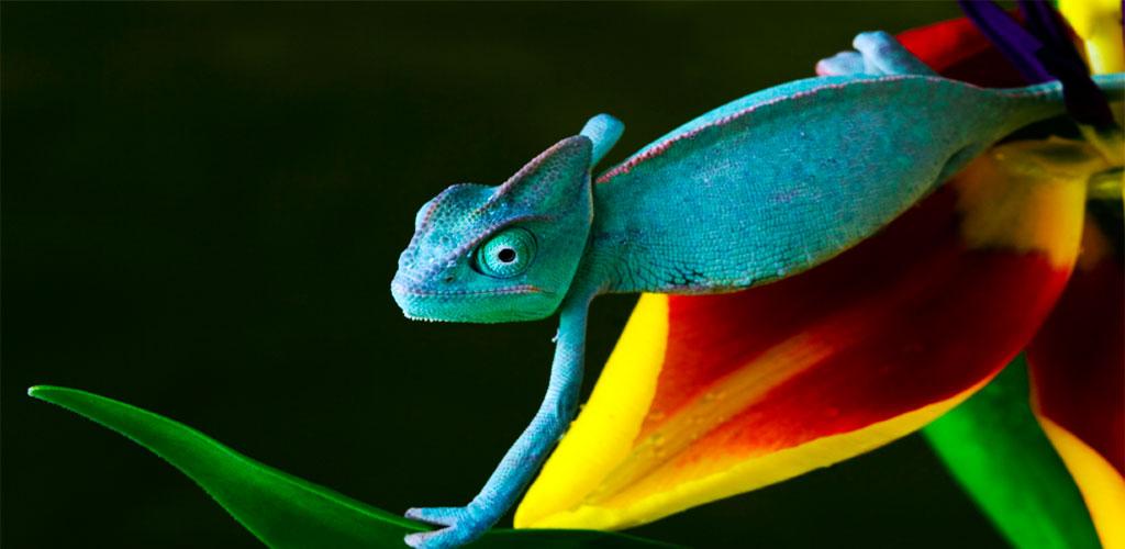 chameleon-slider2